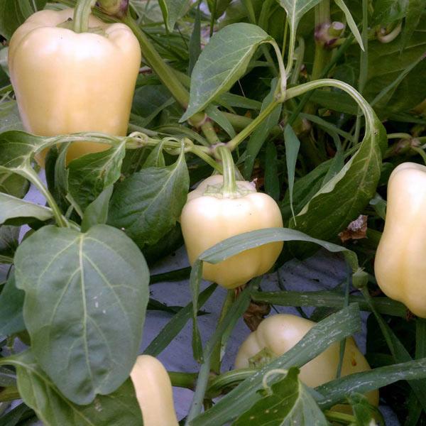 povrce-8