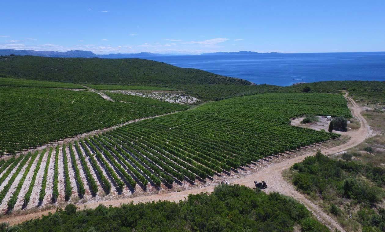 Vinograd Zure